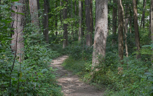 miles of wooded trails